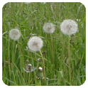 Pollen (de) icon