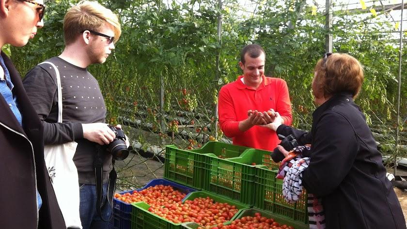 Variedades de tomate cherry en un invernadero almeriense, muy apreciadas por los consumidores jóvenes europeos.
