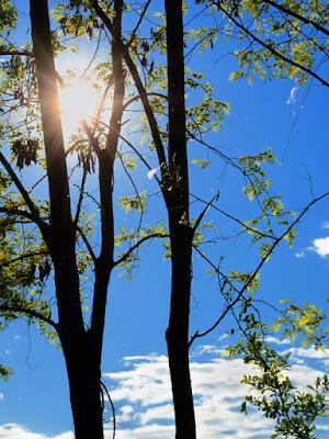 Timida Primavera di www.fioregiallophoto.it