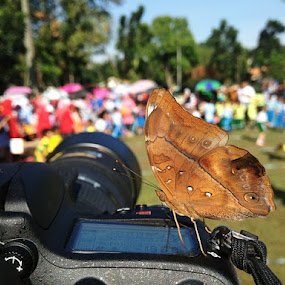 Butterfly on my gear by Ari Yuliarso - Instagram & Mobile iPhone