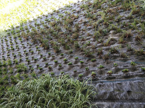 Plantación del jardín de San Vicente del Raspeig
