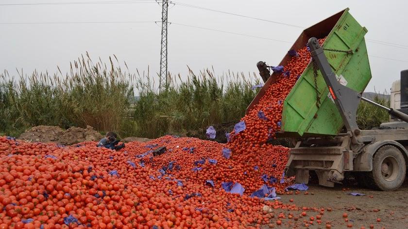 Imagen de archivo de un camión volcando en el suelo un contenedor cargado de tomates.