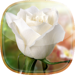 White Rose Live Wallpaper 🌹 Flower Backgrounds