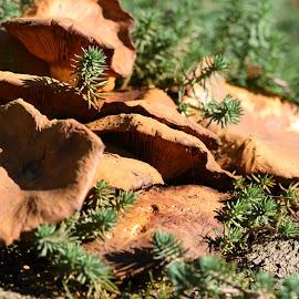 Mystical Mushrooms by Kaz Humpherson - Nature Up Close Mushrooms & Fungi (  )