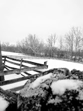 Photo: Black and white photo of fences in the snow by trees at Carriage Hill Metropark in Dayton, Ohio.