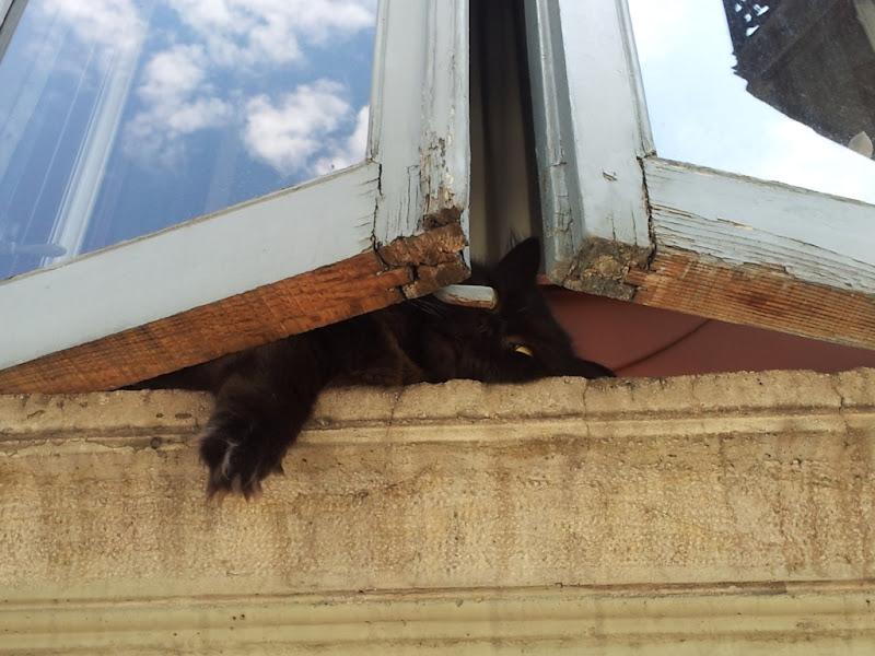 The hidden cat di cristine