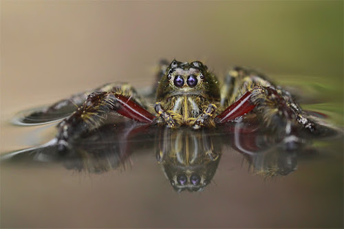 by Tele Nicotin - Animals Insects & Spiders