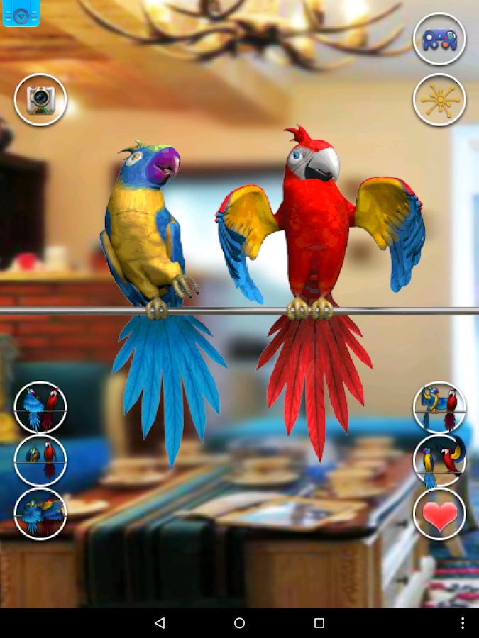 Talking Parrot Couple Free- screenshot