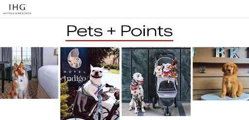 July 23 Bonus Offer Highlight: IHG Rewards – 3,000 bonus points on hotel stays with your pet!