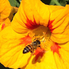 Buzzing around by Donna Probasco - Novices Only Flowers & Plants (  )
