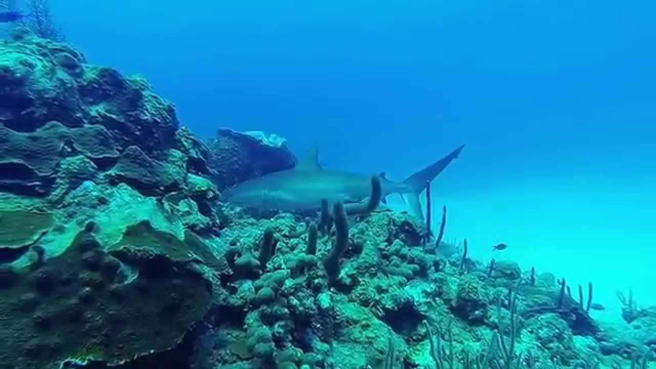 Aprovecha las maravillas del fondo submarino
