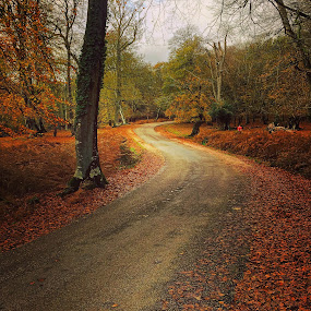 Autumn in the new forest  by Mark Usher - Instagram & Mobile Instagram ( autumn leaves road trees )