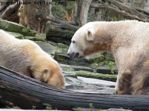 Photo: Das moechte Knut jetzt auch wissen ;-)