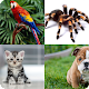 Download Ghiceste animalul de companie For PC Windows and Mac