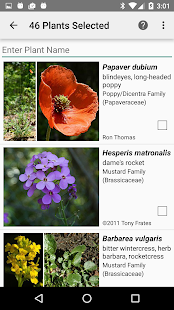 West Virginia Wildflowers- screenshot thumbnail