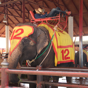 by Timmothy Tjandra - People Street & Candids ( elephants, elephant, show, attraction,  )