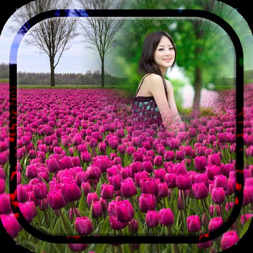 Purple Tulips Photo Frames