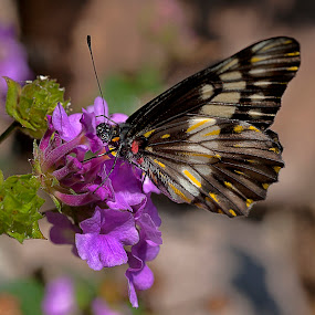 flower in purple tone by Cristobal Garciaferro Rubio - Animals Insects & Spiders ( butterfly, butterflies, puerple flower, leaf, leaves, flowers, flower )