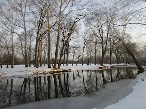 Photo: Trees reflected in a winter pond at Eastwood Park in Dayton, Ohio.