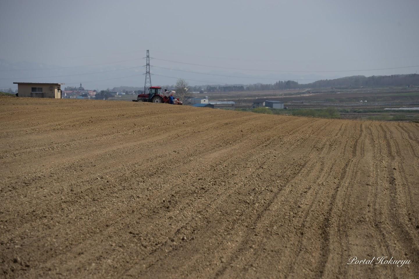播種が始まった畑