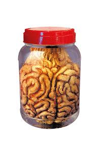 Prop labburk, hjärna