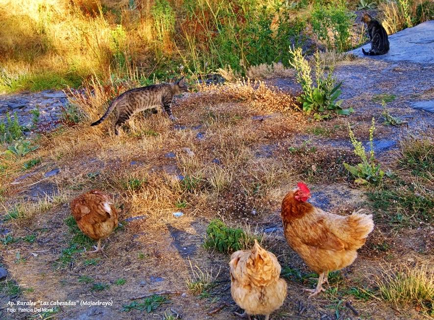 Photo: Nuestras gallinas con unos amigos