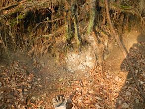 Photo: Zářez lesní cesty úlomky sedimentů (13.1. 2014).