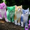 Funny Cat Videos APK