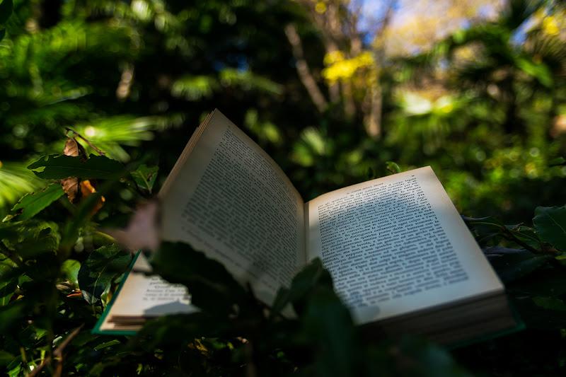 Il libro nella giungla di Maurizio Ghielmetti
