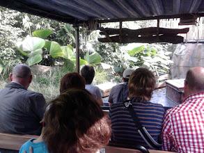 Photo: Bootsfahrt durch den Dschungel