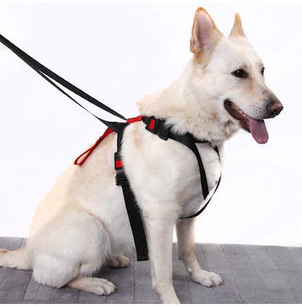 Artfex Säkerhetsbälte till Hund - Small