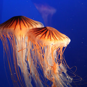 by Alice Alice A - Animals Sea Creatures (  )