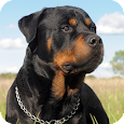 Rottweiler HD Live Wallpaper apk