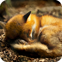 Fox Live Wallpaper icon