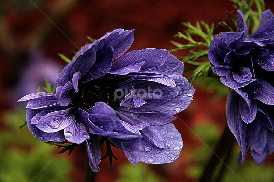 by Michael Miller - Nature Up Close Flowers - 2011-2013