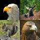 Download Quiz Descubre El Animal For PC Windows and Mac