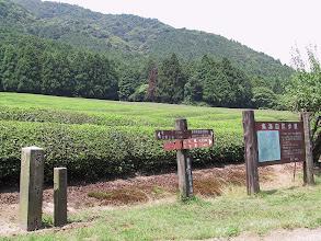 Photo: 山中茶畑