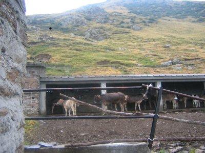 Alpe Tabano (Cavargna)