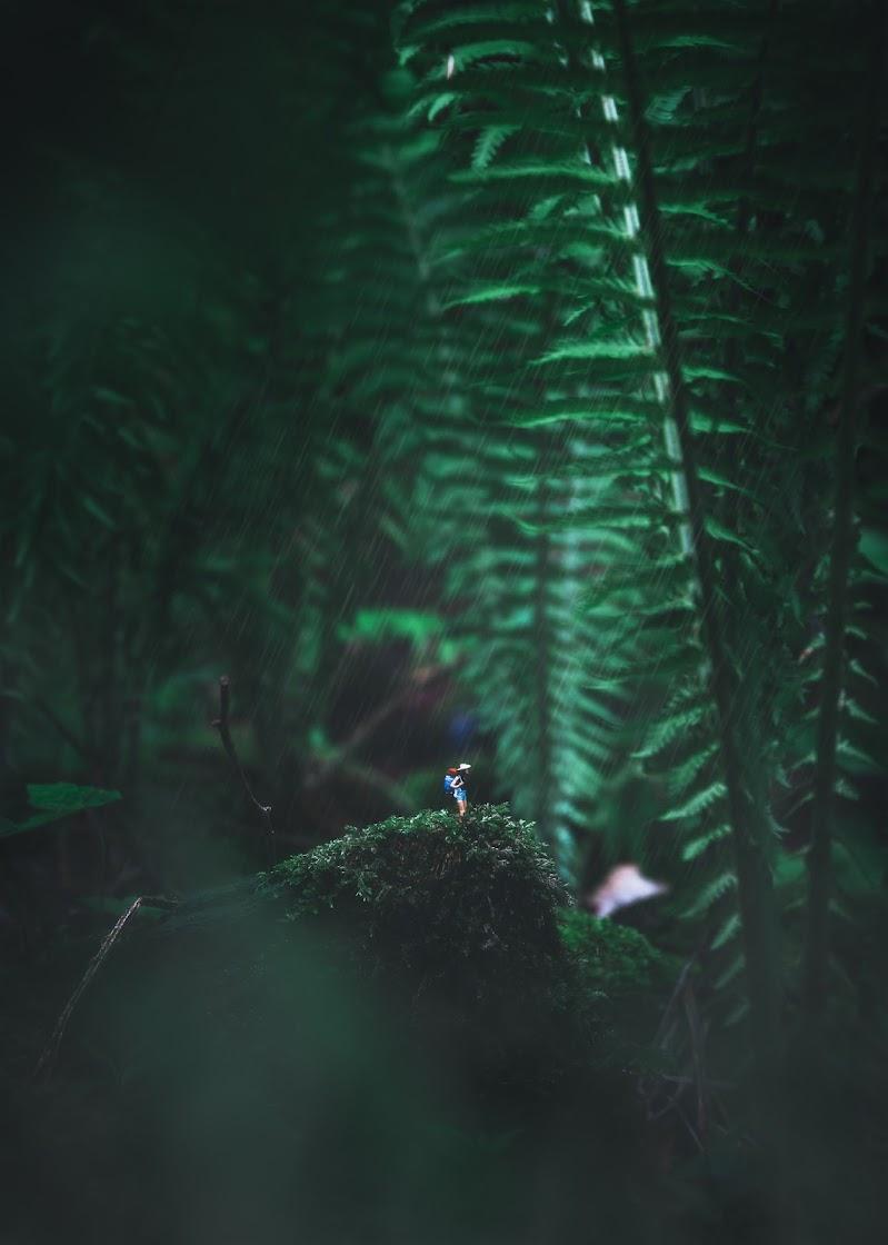 Foresta in miniatura di ste2d