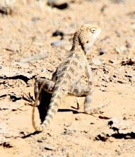 Photo: Day 159 - Lizard