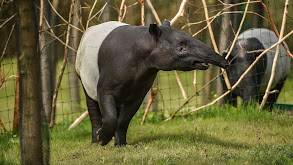 Rhino Surprise! thumbnail