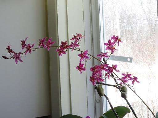 Les orchidées de Grigri Mwn_yJ0JJ8EDAopBQKbXLZ7Hy-Ozg3lVij0wW_uM4OzrAWYT21cTLQt3O54En82JpBgm1bmzwwwLk0nX7GXhIE9xdcRXuIz3a9EgIA0UdHSRuAItpAKpT_VEWNxZKkUuSY75AjY