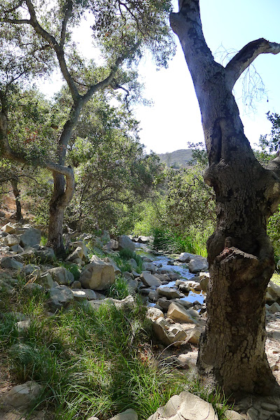 Photo: Elfin Forest, California