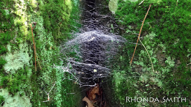Photo: Now I have the chance to shoot the spiderweb.