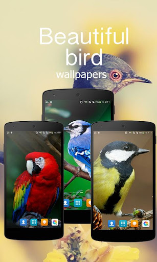 Beautiful Bird Wallpapers