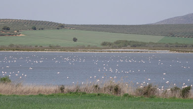 Photo: Yep, lots of flamingos