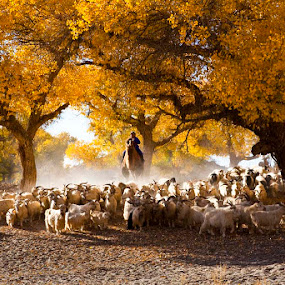 Heading the Sheeps by Goh Poh Leong - Nature Up Close Trees & Bushes