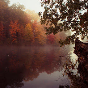 Morning Lake Fog by Gary Poulsen - Novices Only Landscapes ( water, reflection, fog, fall, trees, lake, log,  )
