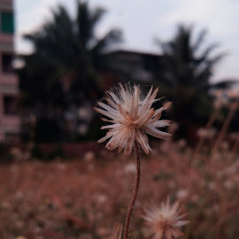 by Bhagyashri  Patwardhan  - Nature Up Close Leaves & Grasses