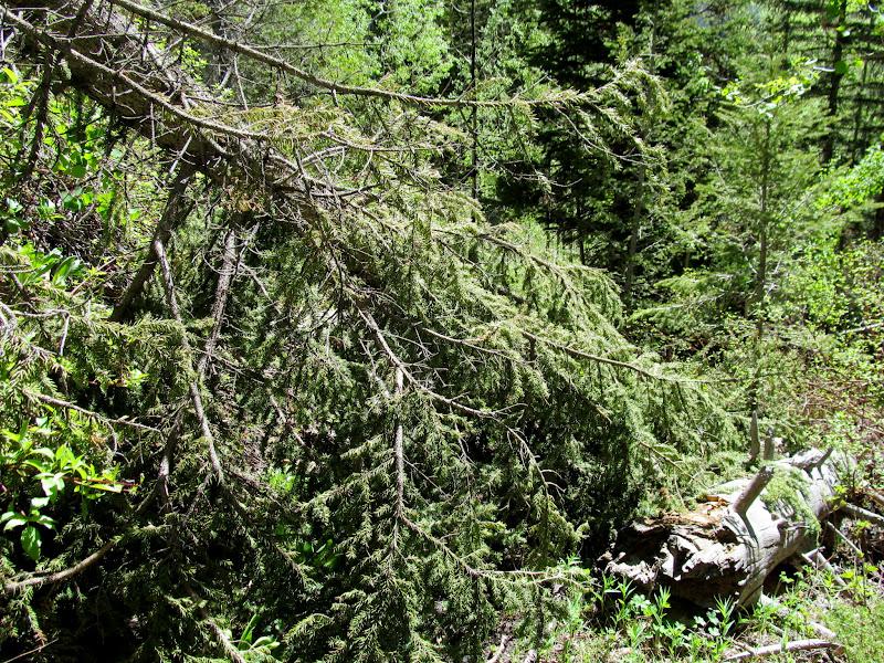 Photo: Fallen trees blocking the trail